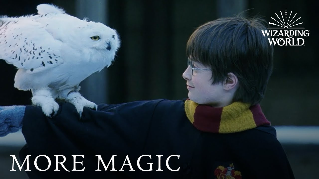 Harry Potter: The Ultimate Christmas Scenes | Christmas in the Wizarding  World