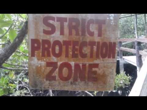 Eco Tourism Bohol (Savima Mangrove Adventure Tour) San Vicente, Maribojoc, Bohol