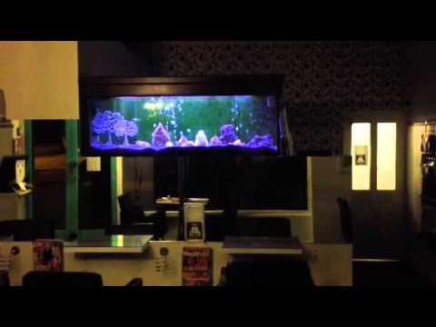 Nice neon tetra aquarium in a hair dresser