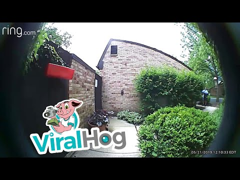 Hilary - Mailman pepper sprays pups for no reason!