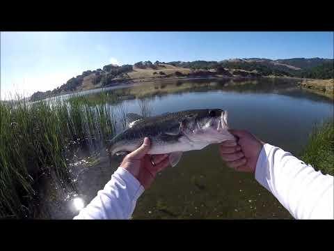 Calero Reservoir Bass Fishing