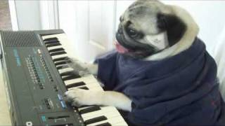 Play Him off Keyboard DOG *ORIGINAL* thumbnail