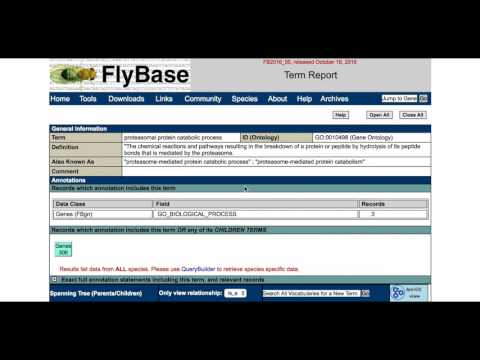 Finding related genes in FlyBase: The Gene Ontology