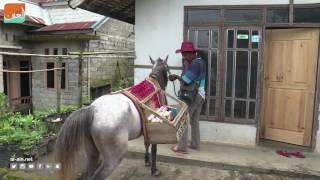 """بالفيديو.. """"مكتبة حصان"""" تنشر المعرفة في مناطق إندونيسية نائية"""