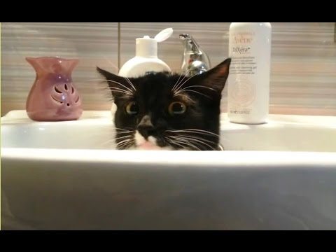 'Cats Who Want Some Privacy Compilation' || CFS