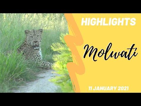 Highlights Molwati male leopard 11 Jan 2021