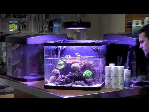 Fish Guy TV Saltwater Reef Maintenance