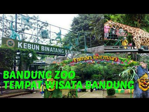 kebun-binatang-bandung-•-wisata-dibandung|-anak-kecil-belajar-ngevlog-bandung-zoo