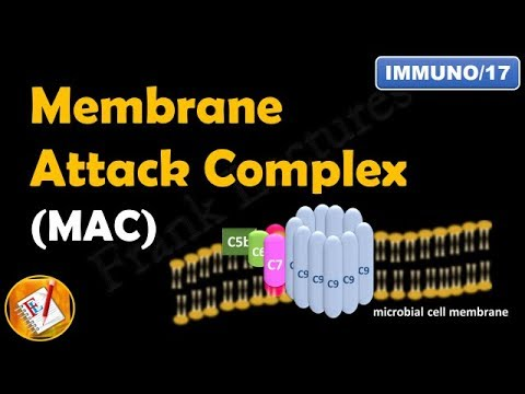Membrane Attack Complex -  Terminal Steps of Complement  Pathways  (Part V) (FL-Immuno/17)