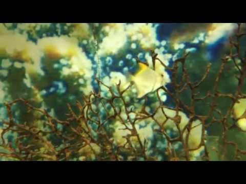 В ТРЦ «Планета»  выставка экзотических рыб | Уфа