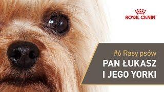 Royal Canin U Ciebie - Pan Łukasz I Yorki