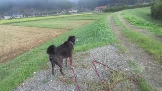 早起きをしてドライブをして朝靄の中の土手散歩♪ちょっと目を離した隙に...