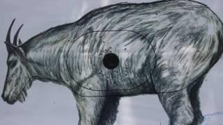 NFAA Field: Fundamentals of an Animal Round