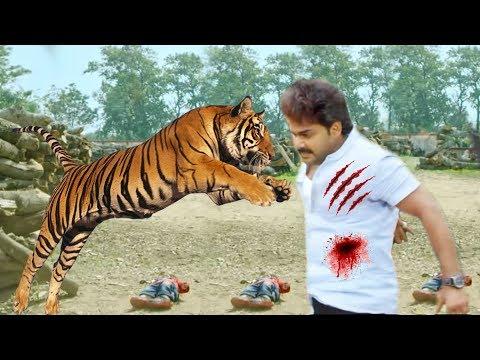 देखिये पवन सिंह असली बाघ से लड़ें, Pawan Singh Fight With Tiger | Sher Singh_ Upcoming Bhojpuri Film
