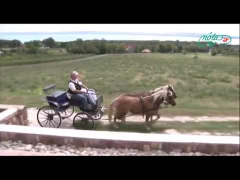 Bunyós Pityu - Balaton közepe videó letöltése