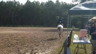 Knight in Shining Armor ridden by Faith Joiner Modified Children's Equitation Over Fences