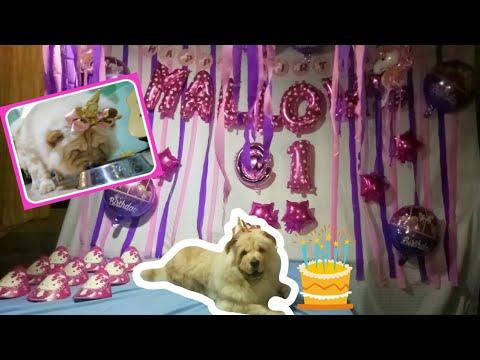 Barkday celebration of Mallows the chow-chow | GARAHE PH TV