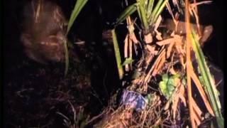 Dunia Lain Eps. Misteri manusia siluman di Gunung bunder Bogor
