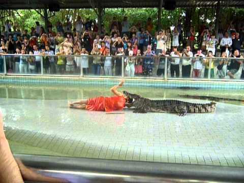 Zоопарк: Укротители крокодилов