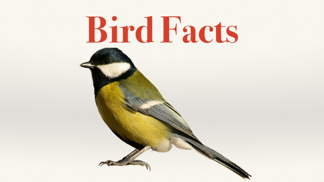 bird facts youtube