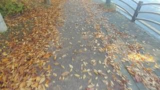 낙엽 쌓인 인도를 걸으며...