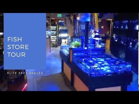 Elite Reef | The premier marine aquarium store in Colorado