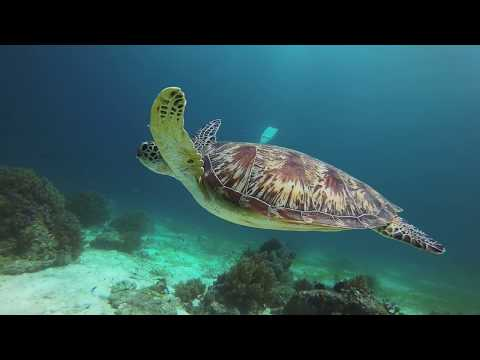 Scuba diving the Philippines