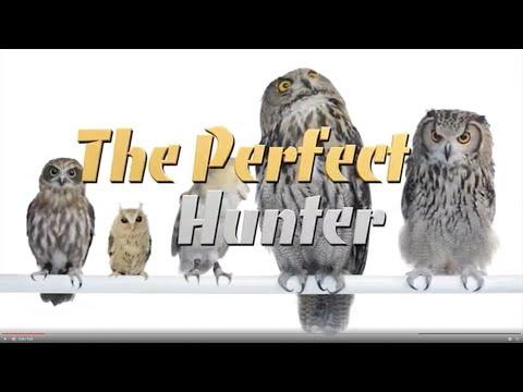 Barn Owls: The Perfect Hunter