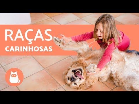 TOP 10 RAÇAS DE CACHORROS MAIS CARINHOSAS
