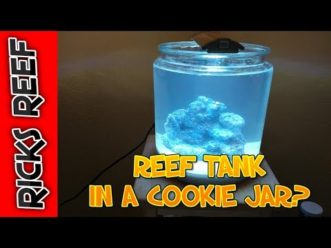 HOW TO: REEF TANK IN A COOKIE JAR - DAY 1