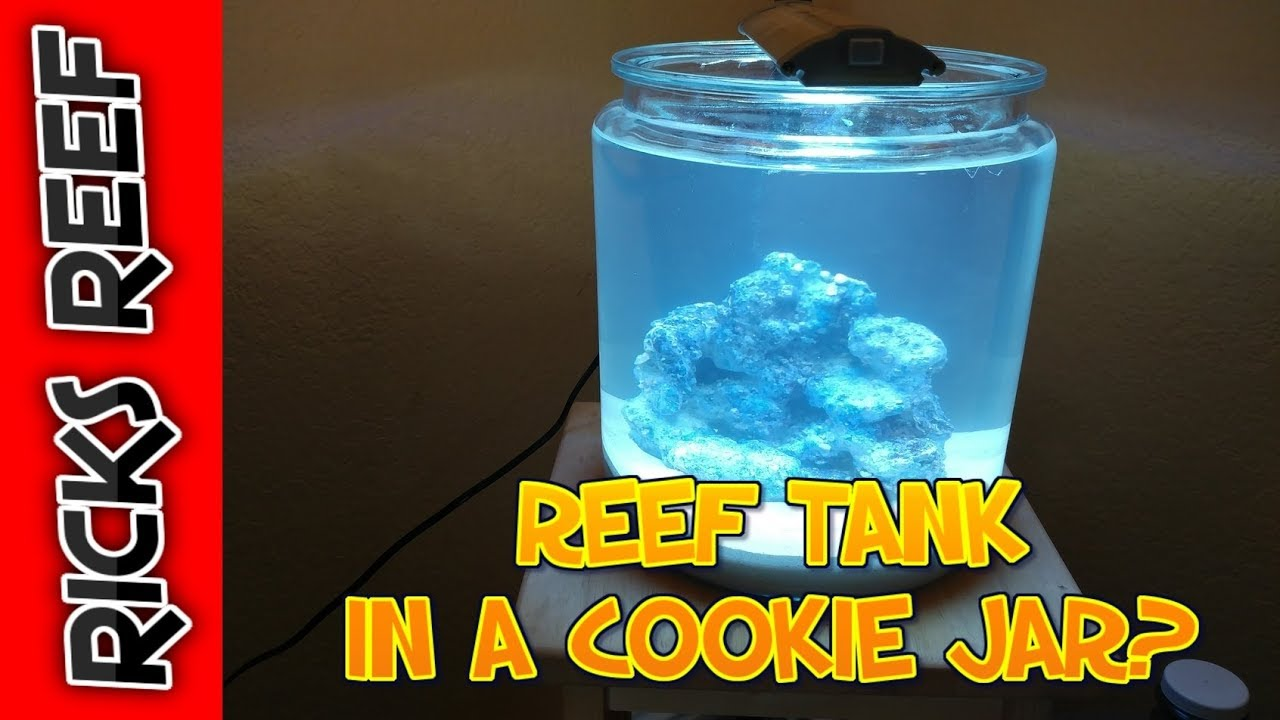 how to reef tank in a cookie jar day 1 youtube