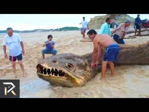 10 Most Mysterious Unidentified Creatures Found