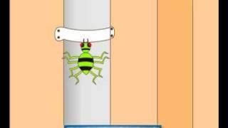 Nursery Rhymes - Incy Wincy Spider