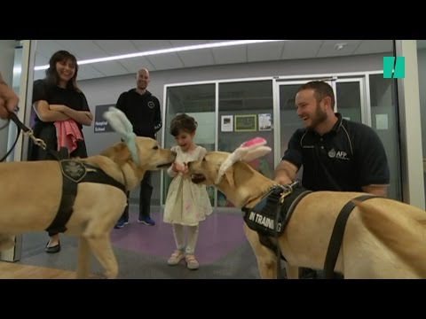 Police Dogs Help Kids Through A 'Ruff' Time