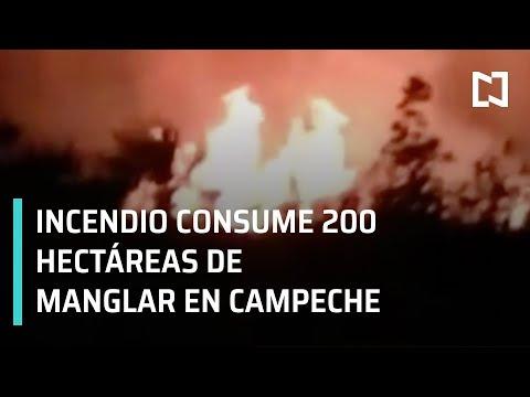 Incendio en manglar de Campeche consume 200 hectáreas - Por Las Mañanas