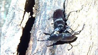 夜の森で昆虫採集をしていたら、おーちゃん、見ちゃいました… とんでも...