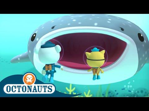 Octonauts - Series 1   Episode 10   Cartoons for Kids   Underwater Sea Education