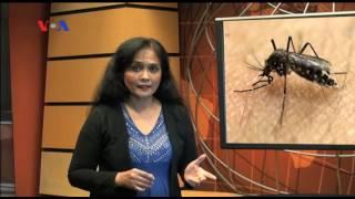 Antisipasi terhadap masuknya virus Zika terus ditingkatkan. Kantor kesehatan pelabuhan, KKP, Bandar .