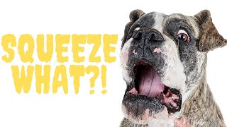 Anal Glands: Every Dog Owner Should Know This! Feat. Dr. Lisa Lippman