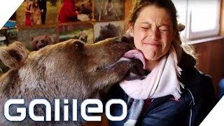 Ein Braunbär als Haustier? Das steckt dahinter! | Galileo |  ProSieben