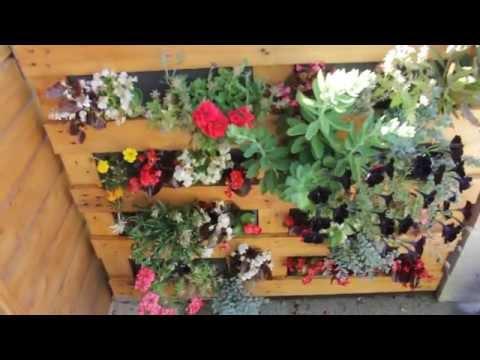 Mur vegetal pas doovi - Mur vegetal palette ...