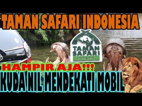 taman-safari-indonesia-puncak-bogor---liburan-akhir-tahun-2019-bersama-family