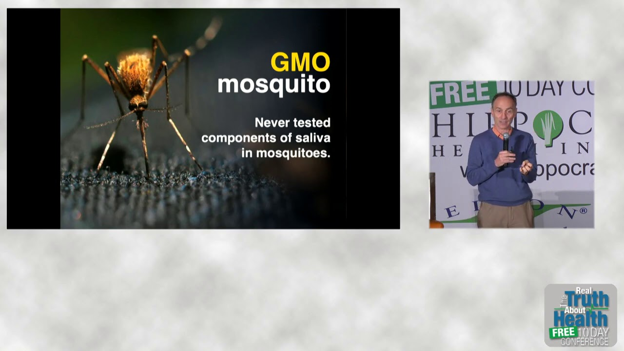 GMO MOSQUITOES. CLEVERNESS WITHOUT WISDOM