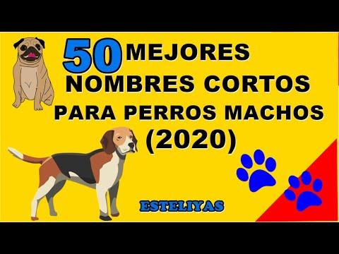 50 MEJORES NOMBRES CORTOS PARA PERROS MACHOS (2020)