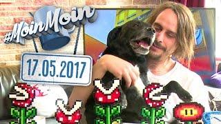 Anton der Hund, MoinMoin on Tour, Festivalplanung | MoinMoin mit Andy Strauß