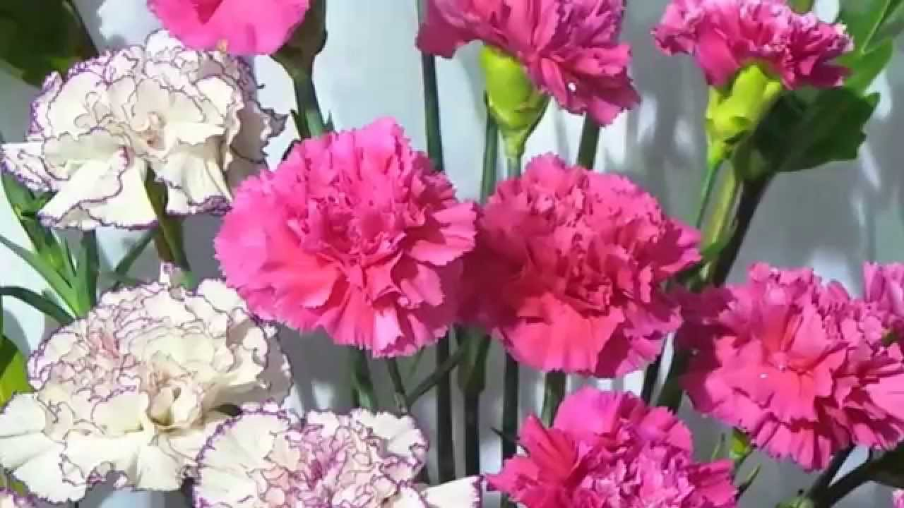 Blooming flowers spring amazing in white nd red yellow flowers blooming flowers spring amazing in white nd red yellow flowers blooming in nature dhlflorist Choice Image