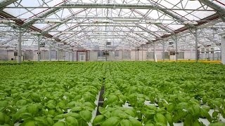 Gotham Greens Rooftop Farming | Built in Brooklyn