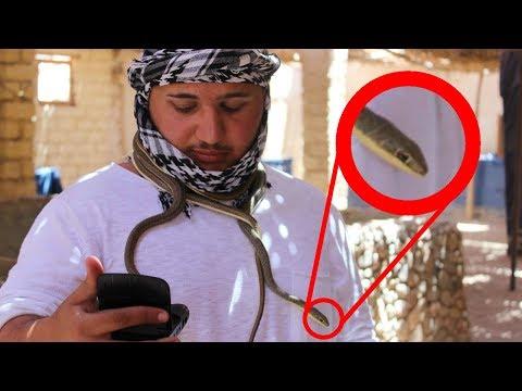 KAMPF MIT GEFÄHRLICHER SCHLANGE ! - ÄGYPTEN VLOG 2017 (Teil 2)   ALI