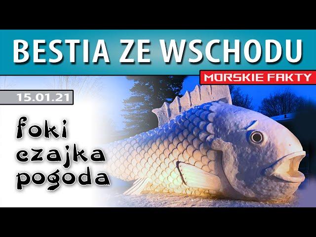 MORSKIE FAKTY ➤ Bestia ze wschodu ● Czajka ● Pogoda ● 15.01.21