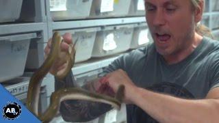 Man Lets Snakes Bite Just For Fun!!!  SnakeBytesTV thumbnail